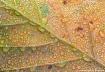 Leaf & Droplets