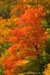 Foliage in Pinkha...