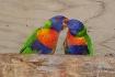 Colorful Kiss !
