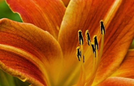 ~Lily~