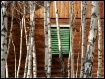 BIRCHES & GREEN S...