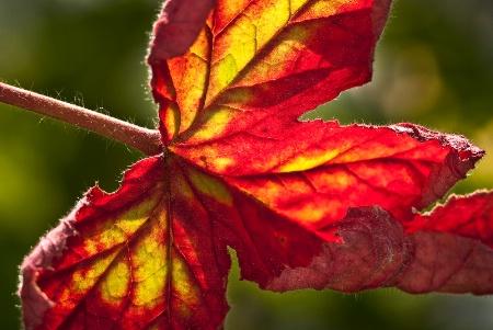Fall Colors backlight