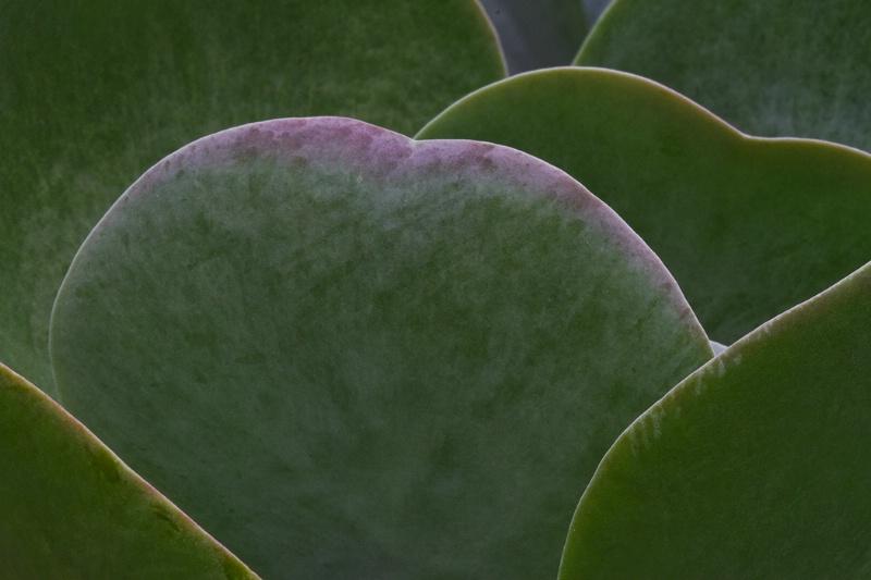 Layered Leaves  - ID: 9312465 © Jim Kinnunen