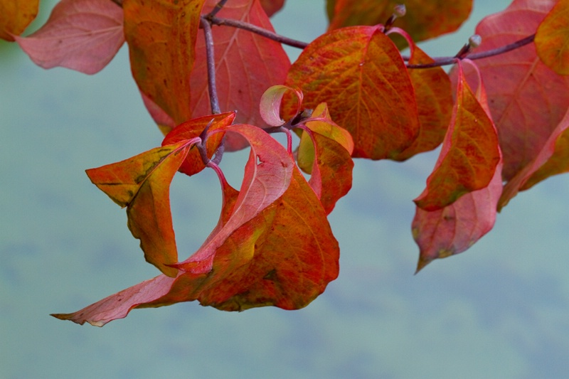 Fall Colors - ID: 9312472 © Jim Kinnunen