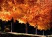 Fall Asheville NC...