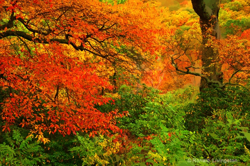 Colorful Trees - ID: 9335528 © Ron Livingston