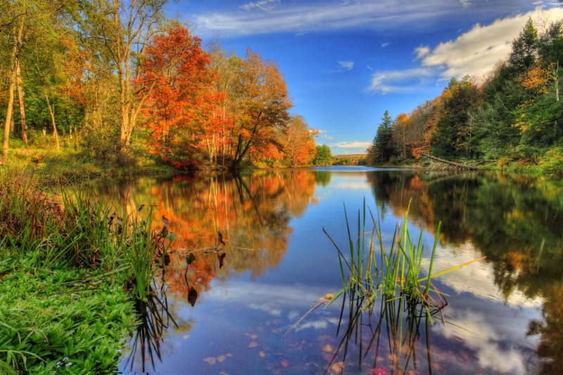 Hust Pond Reflections