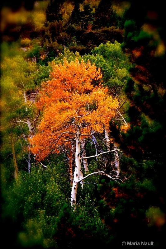 Spot of Color ~ Yosemite  - ID: 9361663 © Simply  Nonna