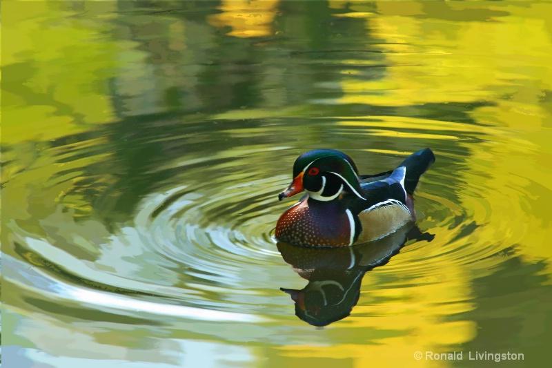 Wood Duck - ID: 9388288 © Ron Livingston