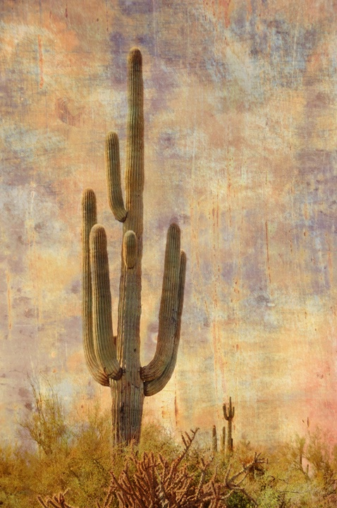 Saguaro - ID: 9393118 © Sherry Karr Adkins