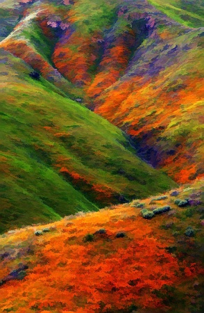 The Hills are Alive!  with color!