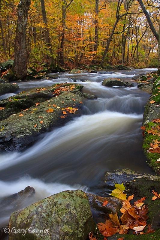 Brandywine Creek, Pa. Fall 09