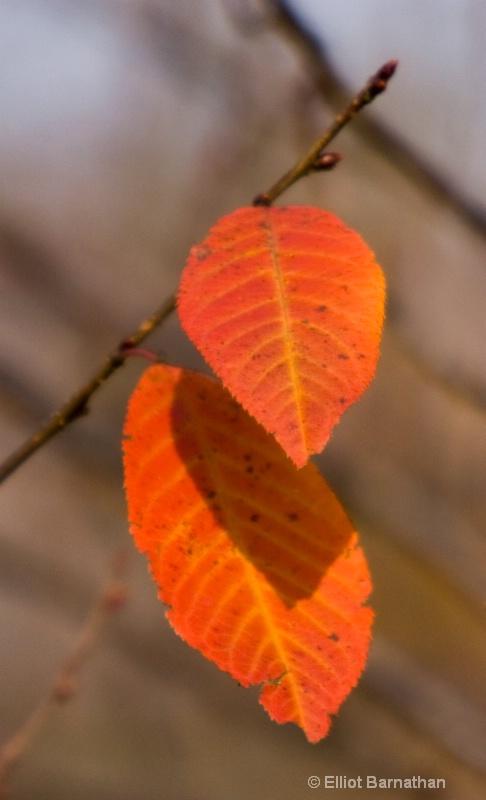 Fall Reflections 27 - ID: 9399577 © Elliot S. Barnathan