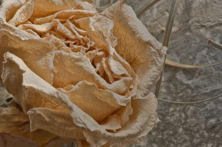 Arid Rose