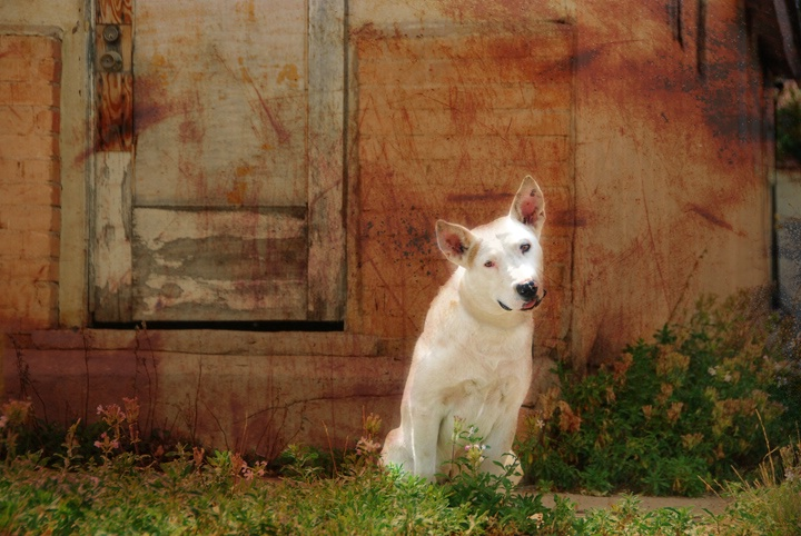 Guard Dog - ID: 9431806 © Sherry Karr Adkins
