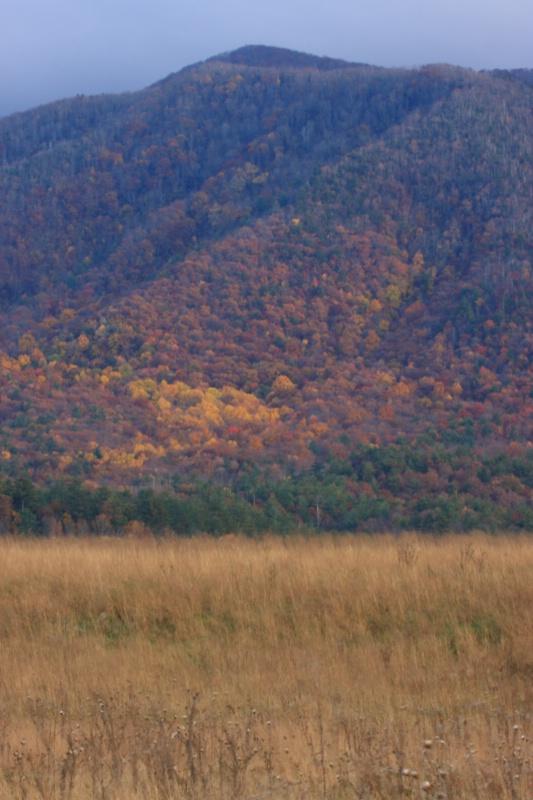 Fall's Colors, GSMNP, 10.30.09