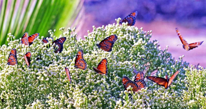 Migrating Monarchs - ID: 9452245 © Mindy T. DiVincenzo