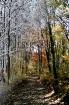 Fall-Winter Trail...