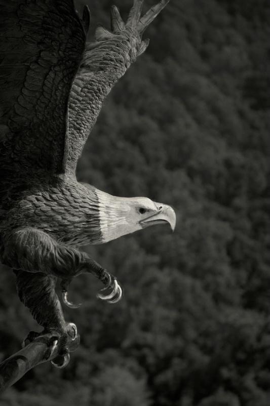 Soaring - ID: 9471036 © John Singleton