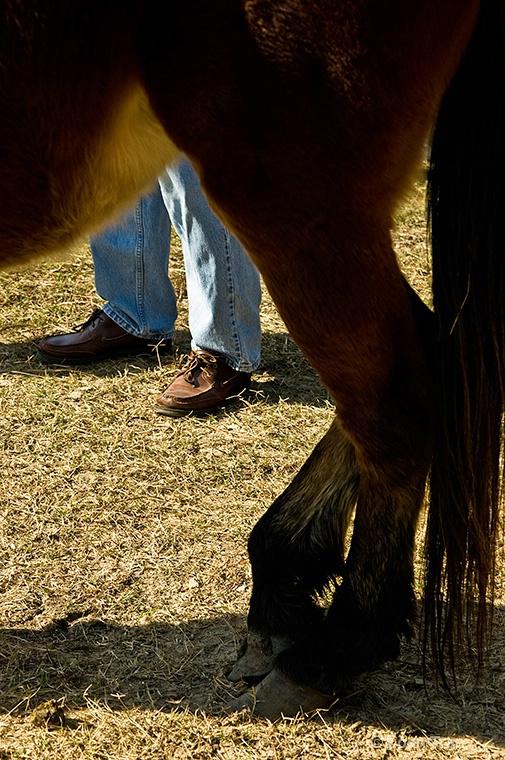 Feet & Hooves - ID: 9479044 © Loan Tran