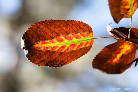Leaf Within a Leaf II