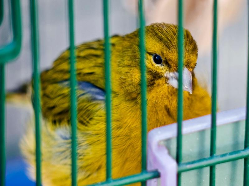 Bird (pink desaturated)