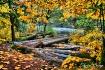 Autumn Log Jam