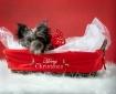 Abbie Christmas 1