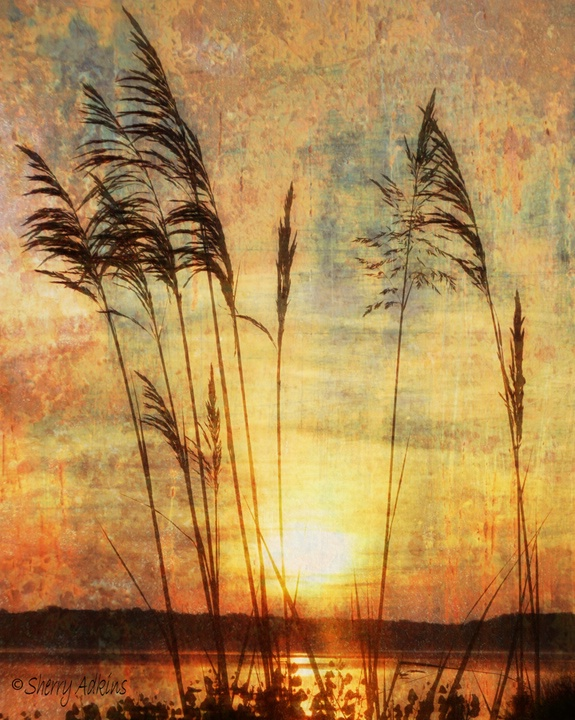 Through the Reeds - ID: 9500093 © Sherry Karr Adkins
