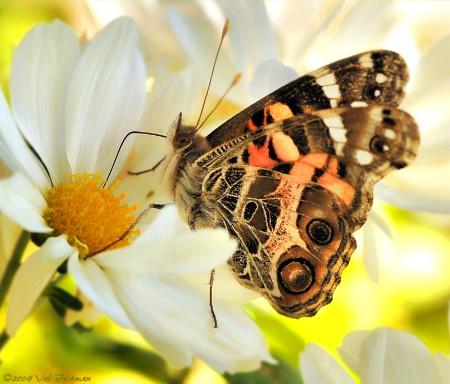 Bye, Bye Butterflies