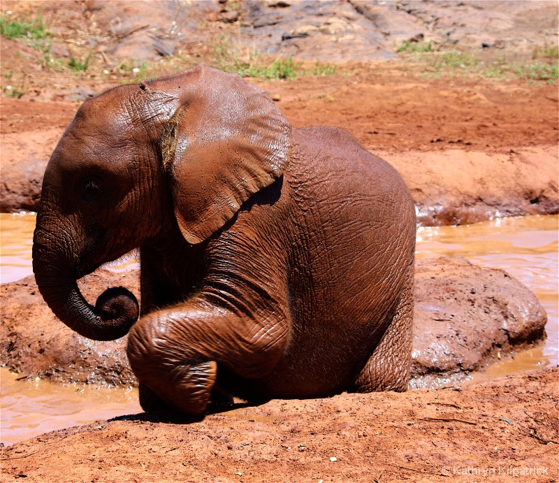Orphan Baby Elephant - ID: 9510122 © Kathryn R. Kilpatrick