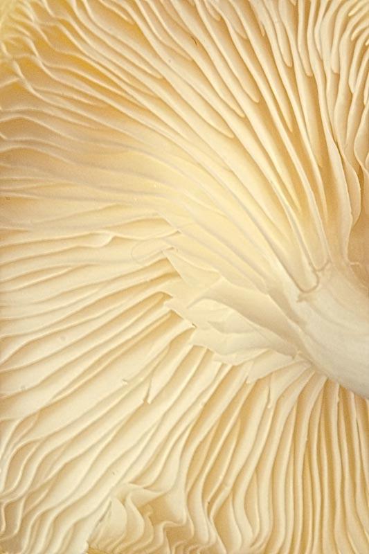 Mushroom Waves - ID: 9550548 © Marilyn Cornwell