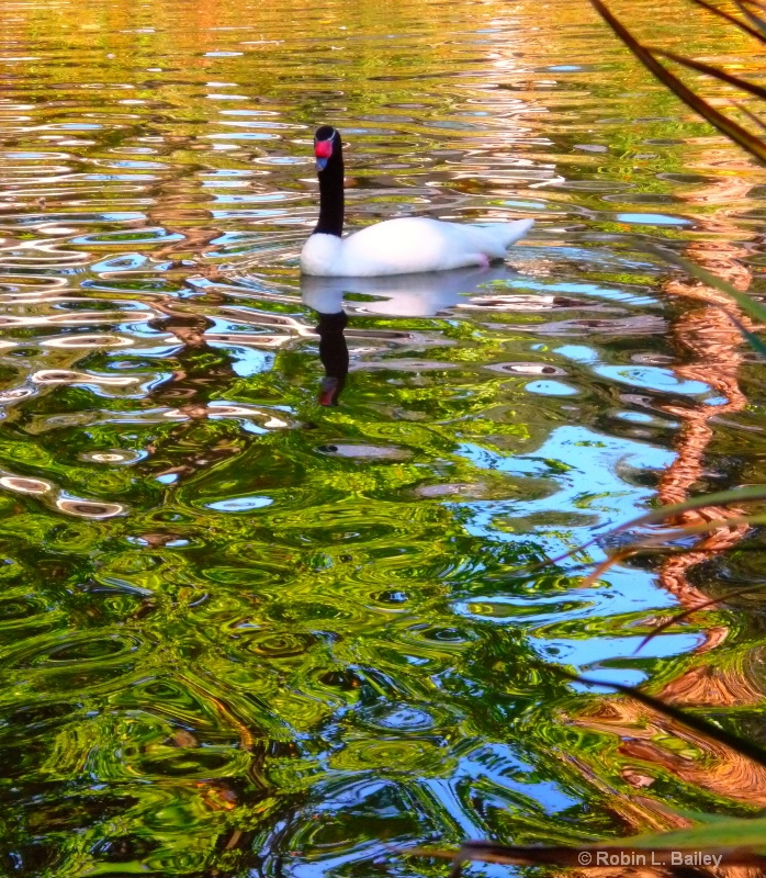 Patiently Wading...