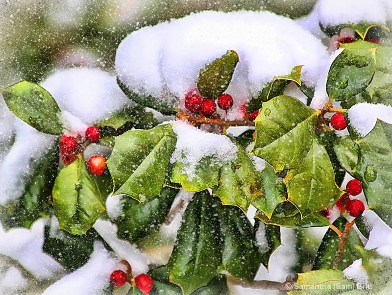 Winter Holly 4