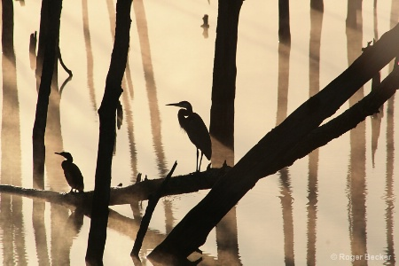 The Cormorant and The Heron