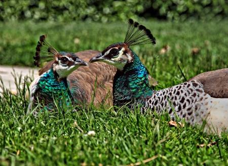 Your beak is definitely bigger than mine