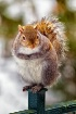 Squirrel on Balco...