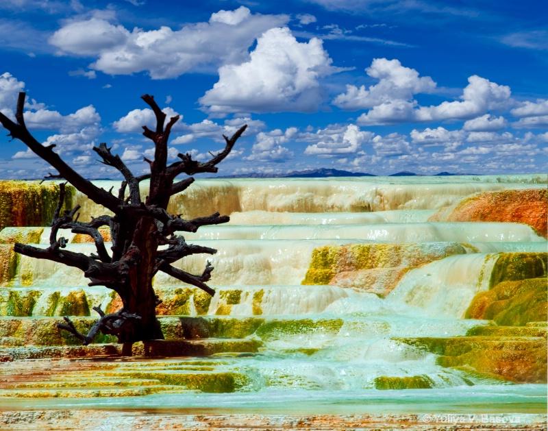 Mammoth Hot Springs. Main Terrace<p> - ID: 9580971 © Yulia Basova