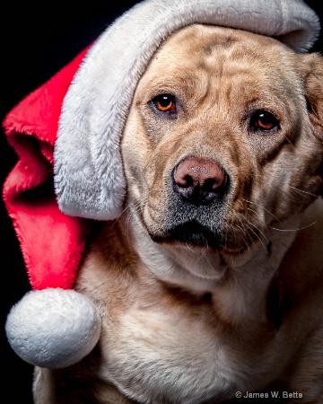 Santa Ginger