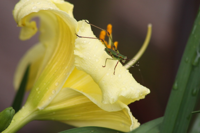 Lily and the Bug - ID: 9592967 © Judy Riley