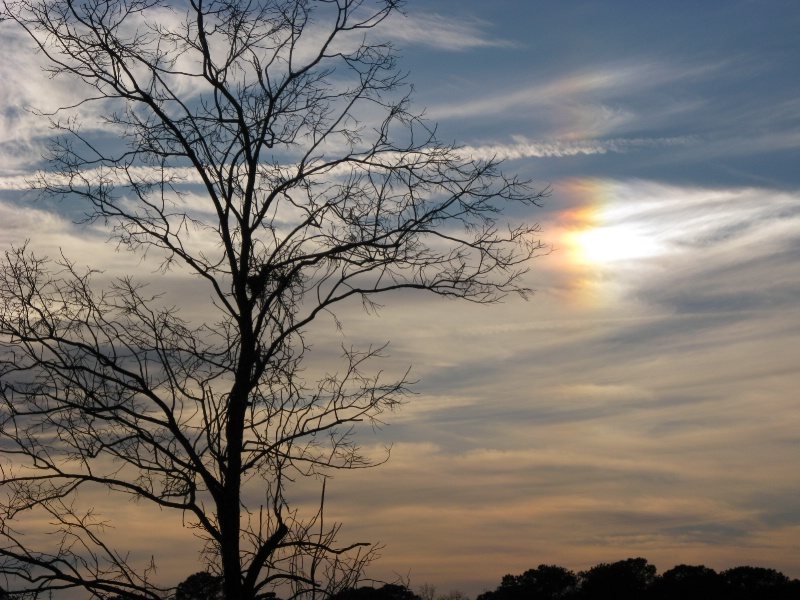 Lexington Sunset - ID: 9594553 © Judy Riley
