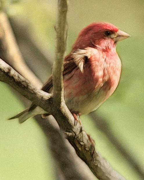 Pretty Birdie In A Tree