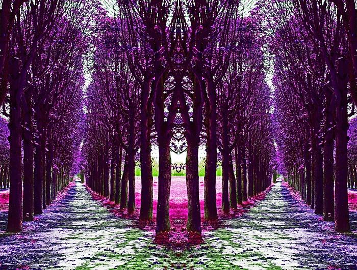 Tree Arcade #1, Fontainebleau, France  - ID: 9608597 © STEVEN B. GRUEBER
