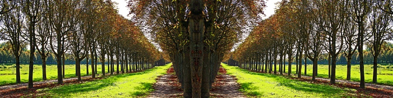 Tree Arcade #2, Fontainebleau, France  - ID: 9608599 © STEVEN B. GRUEBER