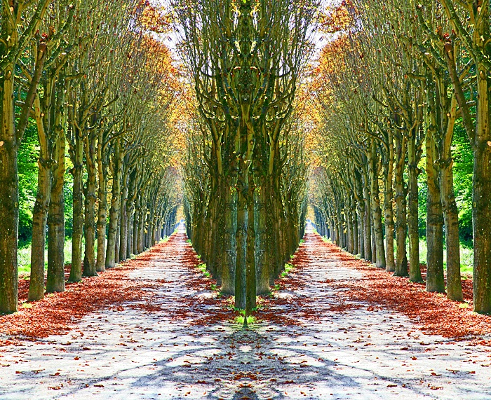 Tree Arcade #3, Fontainebleau, France  - ID: 9608600 © STEVEN B. GRUEBER