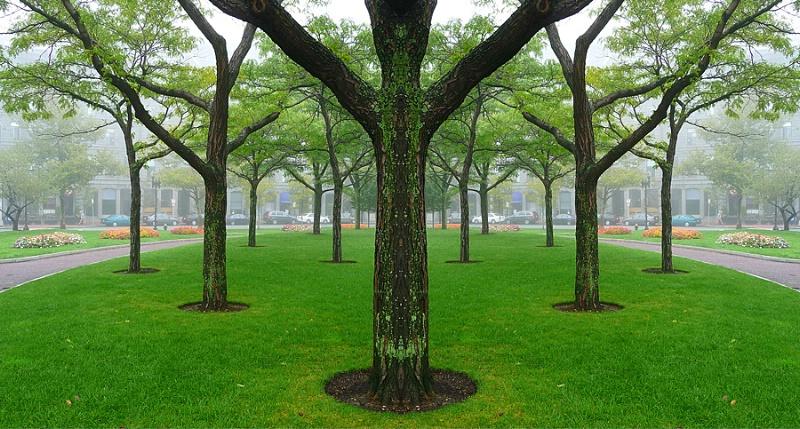 Trees in Fog, Boston - ID: 9608601 © STEVEN B. GRUEBER