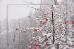 First Snowfall, F...