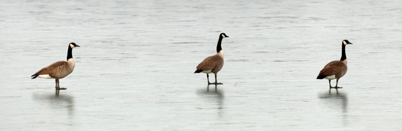 Ice Walking - ID: 9615644 © Stacy Lankford