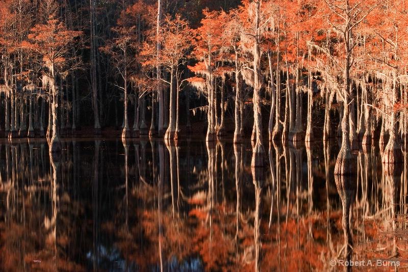 Cypress Colors at Sunrise - ID: 9616367 © Robert A. Burns
