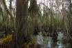 swamp.j.lafite